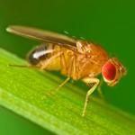 Miljön förändrar DNA enligt ny studie