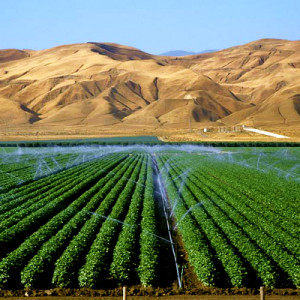 Agriculture Israel